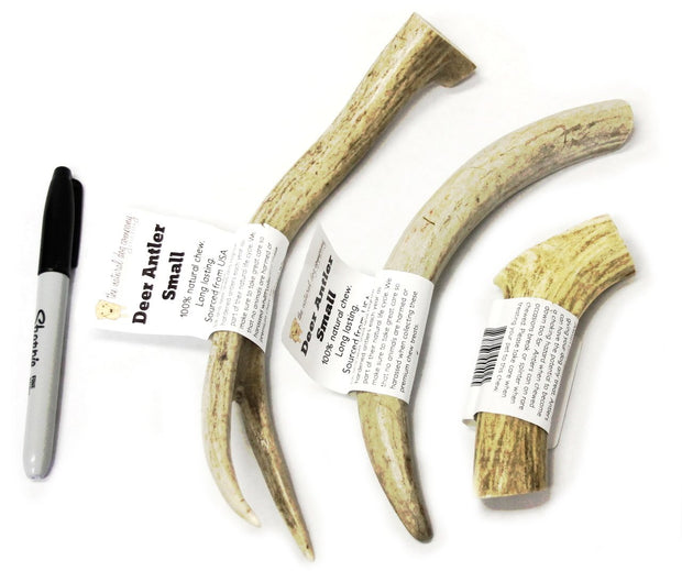 Natural Shed Deer Antler | The Natural Dog Company