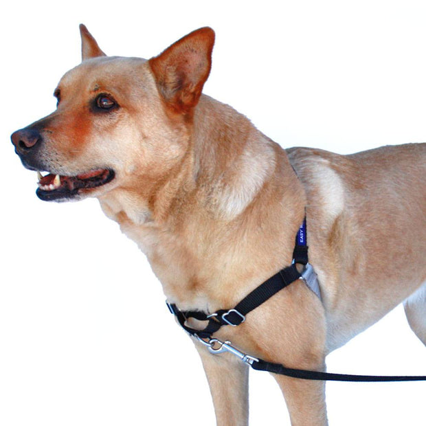 Easy Walk Harness | Petsafe