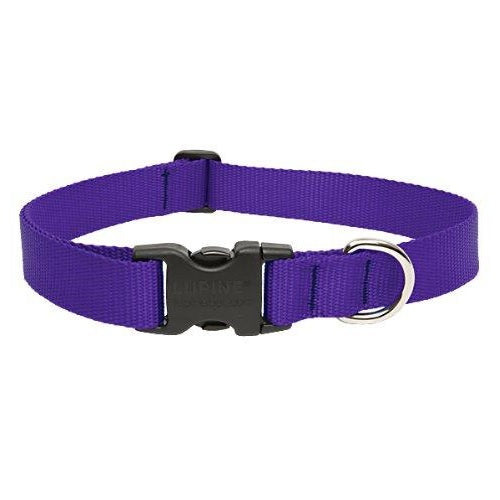 Purple Collar | Lupine