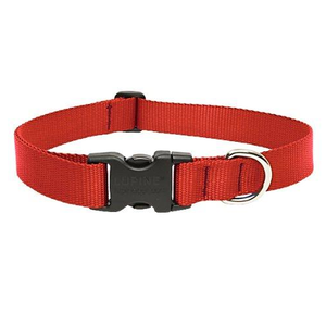 Red Collar | Lupine