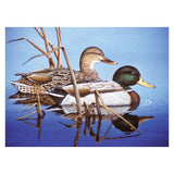 midoco.ca: Royal & Langnickel Paint by Numbers Blue Water Mallards