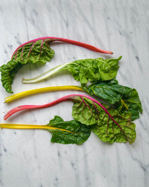 FreshZen Easy Swiss Chard