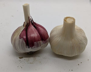 Rose de Lautrec garlic bulbs- with a deep red clove wrapping color and attractive white bulb papers.