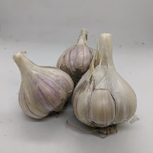 Anarres garlic bulbs- a garlic variety bred from true seed production via pollination and sexual crossing of flowers