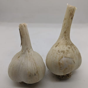 Arsia garlic bulbs- a garlic variety bred from true seed production via pollination and sexual crossing of flowers