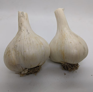 French Pink garlic bulbs. An heirloom Porcelain garlic variety.