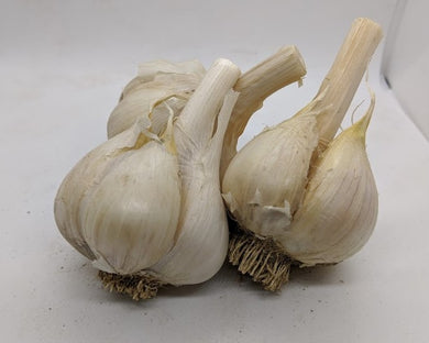 Romanian Red garlic bulbs. A Porcelain variety from Romania