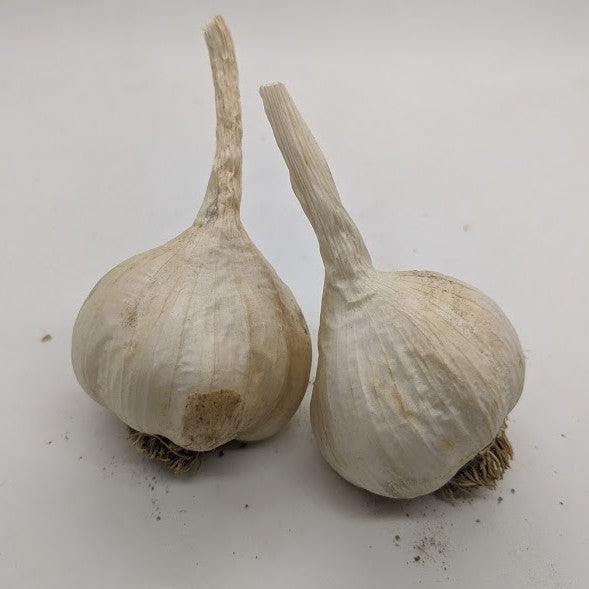 Bolivian Silverskin garlic bulbs