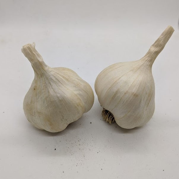 Greek Silverskin garlic bulbs