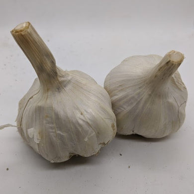 Blanak (also spelled Blanik), a unique garlic variety sometimes sold as a Glazed Purple Stripe, though I believe it may be its own unique subtype underneath the Marbled family.