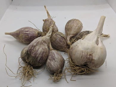 Nepal garlic bulbs and rounds