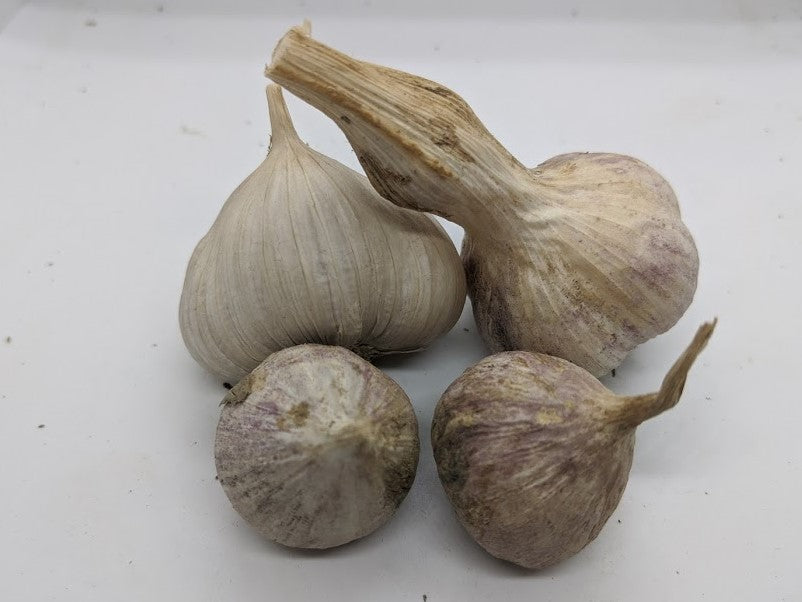 Cusco garlic bulbs and rounds