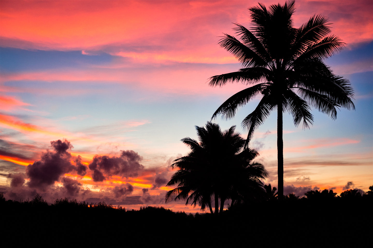 COOK ISLANDS PALMS