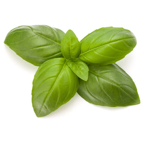 Basil, Organic Essential Oil