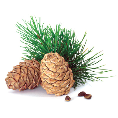 Cedarwood, Atlas Essential Oil