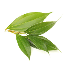 Cinnamon Leaf - Cosmetic Grade Oil