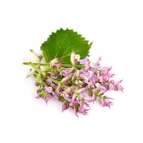 Clary Sage - Cosmetic Grade Oil