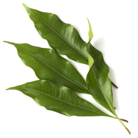 Clove Leaf Essential Oil - BP