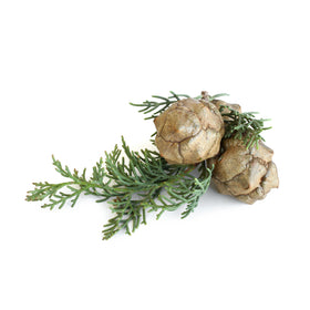 Cypress, Provence Essential Oil