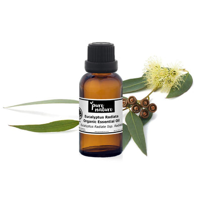 Eucalyptus Radiata - Organic Essential Oil