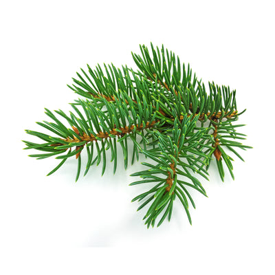 Fir Needle, Silver Essential Oil
