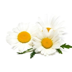Chamomile, German - Organic Essential Oil