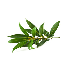 Bay Laurel Essential Oil
