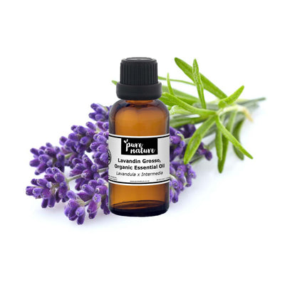 Lavandin, Grosso - Organic Essential Oil