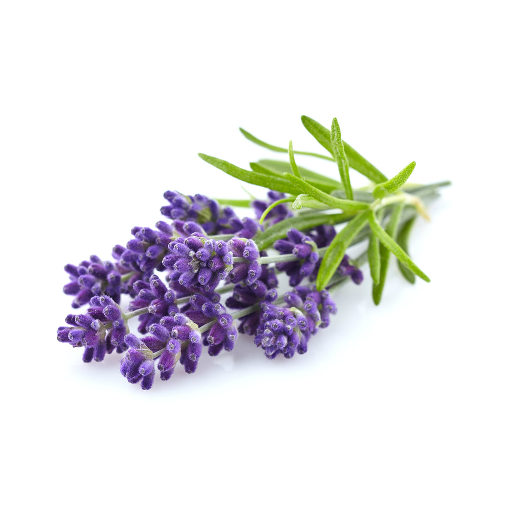 Lavender Flowers Grade One French Food Grade Smells Lovely Sleep Aid 100g Pack