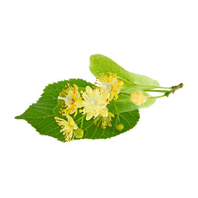 Lime/Linden Flower Extract