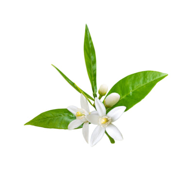 Neroli, Australian  Essential Oil  3% in Jojoba