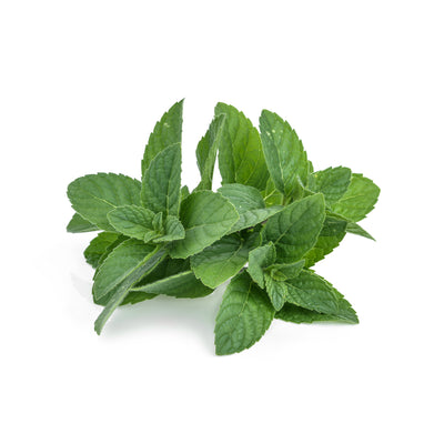 Peppermint, Arvensis - Organic Essential Oil