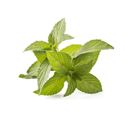 Spearmint Lip Balm Flavour Oil - Organic 30ml
