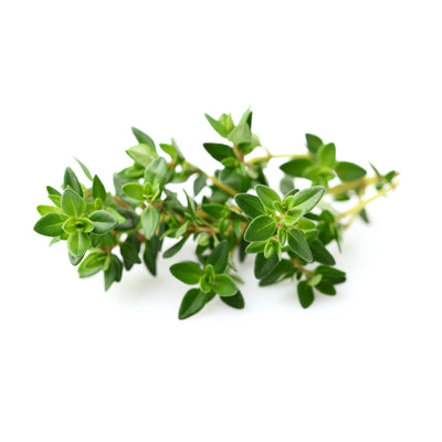 Thyme, Red Essential Oil