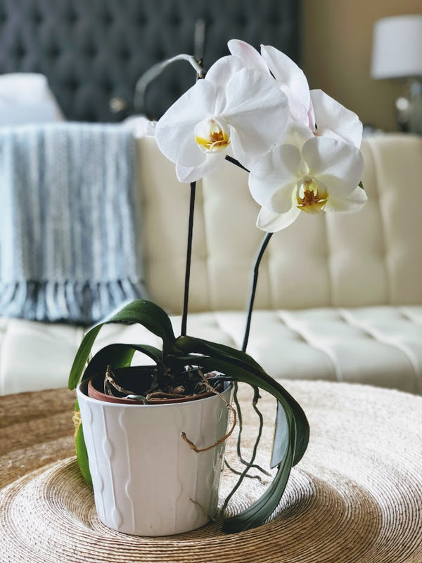 The Grace and Beauty of Orchids