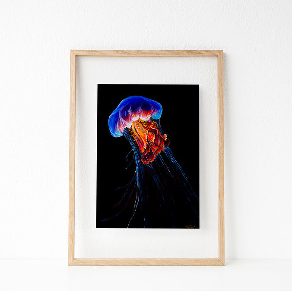 Jellyfish (1/25 Limited Edition)