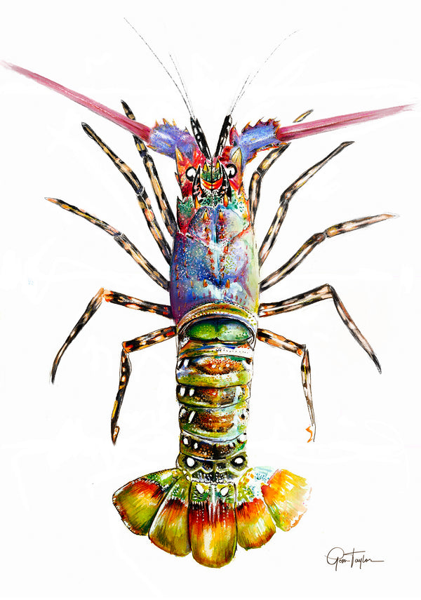 Painted Crayfish