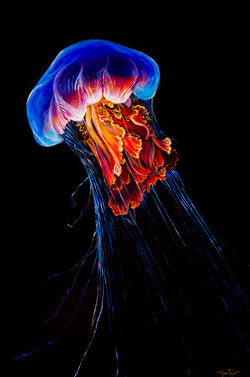 Jellyfish (Original)