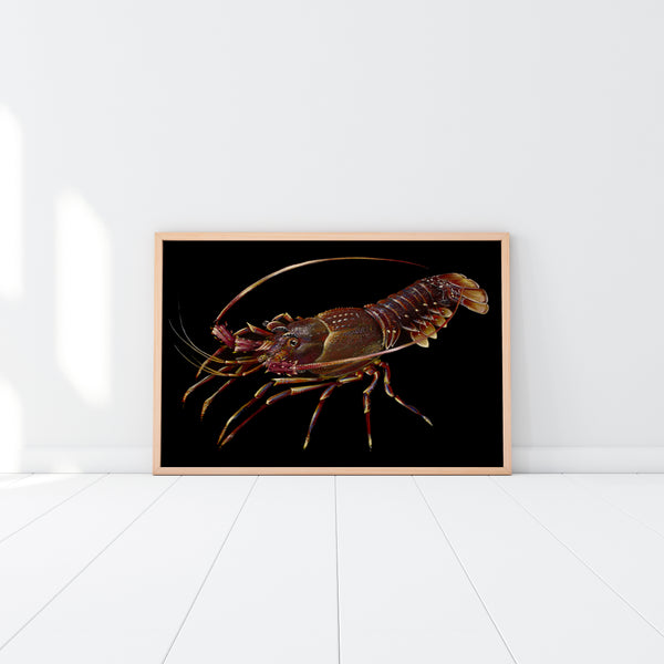 Western Rock Lobster (Limited Edition Print 1/25)