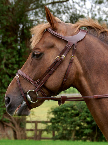 Dy'on difference bridle B1031 *