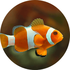 Couch Potato Aquatics - Everything you need for your Large Fish, Small Fish, Saltwater Fish or Freshwater Fish