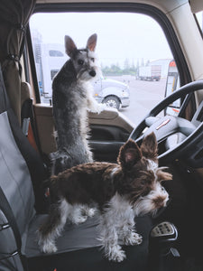How To Solve The Biggest Problems For Truck Drivers With Pets On the Truck