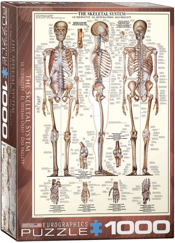 The Skeletal System - EuroGraphics 1,000 piece Jigsaw Puzzle