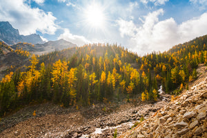 Larch Season at Welsh Lakes, British Columbia
