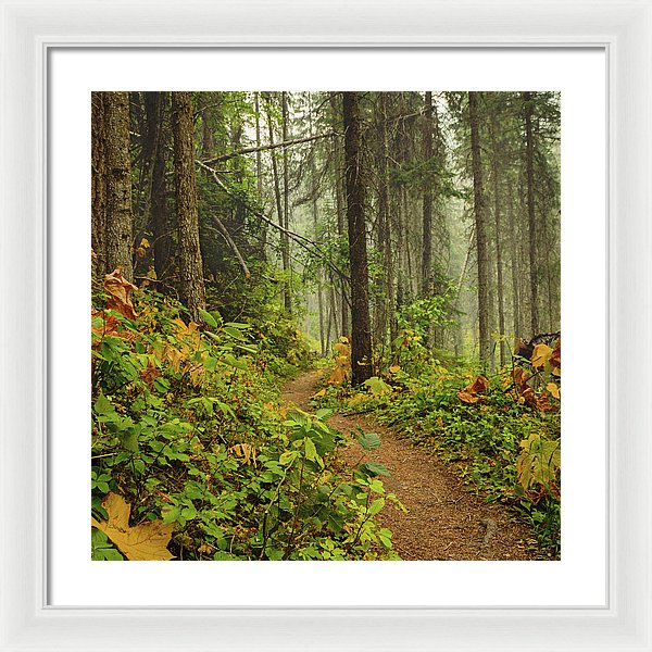 Autumn In Kootenay National Park, British Columbia - Framed Print