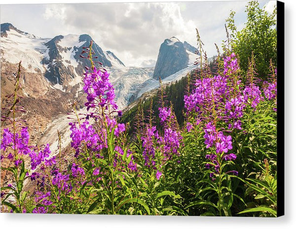 Fireweed And The Spires, Bugaboo Provincial Park In Fall - Canvas Print