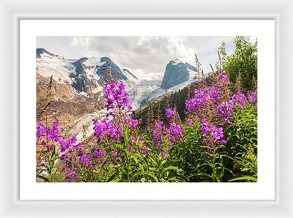 Fireweed And The Spires, Bugaboo Provincial Park In Fall - Framed Print