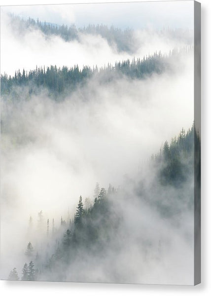 Forest Layers In Fog - Canvas Print