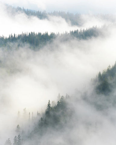 Forest Layers In Fog - Art Print