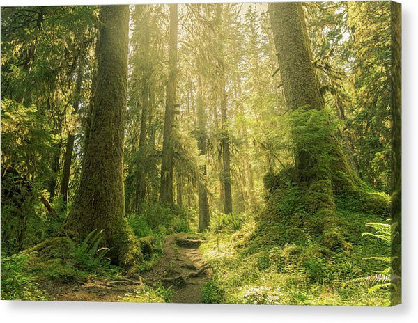 Hoh Rainforest, Olympic National Park, Washinton - Canvas Print